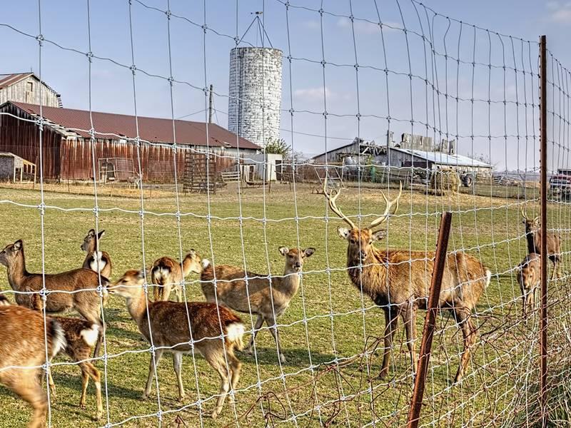 Deer fencing options